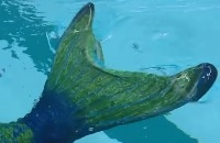 Het Klokhuis - Hoe word je een zeemeermin