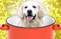 Het Klokhuis - Waarom eten we geen honden filmpjes