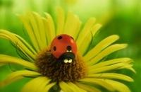 Minuscule - Het lieveheersbeestje