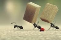 Minuscule - De vallei van de verloren mieren