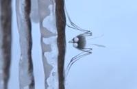 Miniscule - De mug van het Caribisch gebied