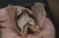 De Buitendienst - Hoe zien vleermuizen in het donker filmpjes