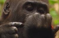 Ed and Eppa: De gorilla