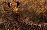 Ed and Eppa: De cheetah