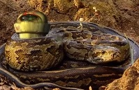 Ed and Eppa: Slangen