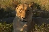 Freek op Safari - Leeuwen zoeken