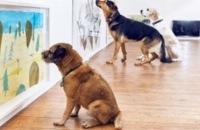 Museum voor honden