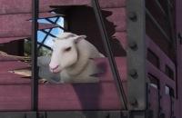 Thomas de Trein - Heel belangrijke schapen