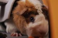 Kleine hamsters vieren Halloween