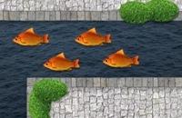 Jeugdjournaal - Man moet 280 goudvissen uit gracht halen