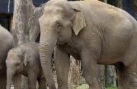 Olifantenvlog - Slapen bij de olifanten