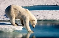 Treurig record - Noordpool had nog nooit zo weinig ijs
