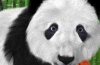 Kidsweek - Bouwien en Menno naar de panda s