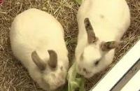 Jeugdjournaal - Een happy konijn is niet alleen