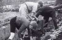 Oorlogskind 1940 - 1945 - Kinderen in de Tweede Wereldoorlog