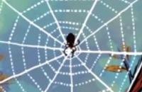 Het Klokhuis - Hoe maakt een spin een web
