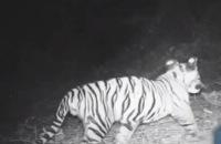 Freeks wilde wereld - De Sumatraanse tijger