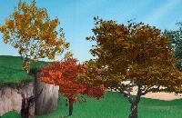 Bomen en bladeren
