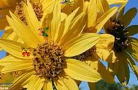 Vlinders Spelletjes