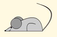 Rijmspel