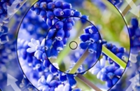 Zomer Bloemencirkel