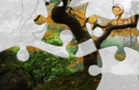 Herfstboom Jigsaw puzzle Spelletjes