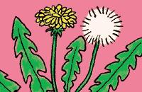 Plantenkwis